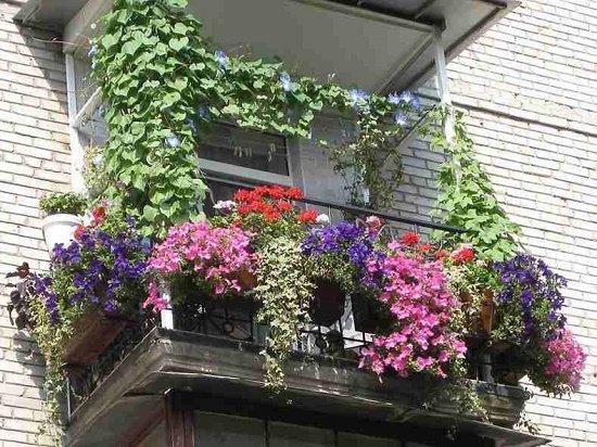 Растения для балкона в тени