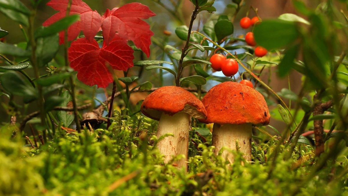 Картинки, осенние грибы открытка