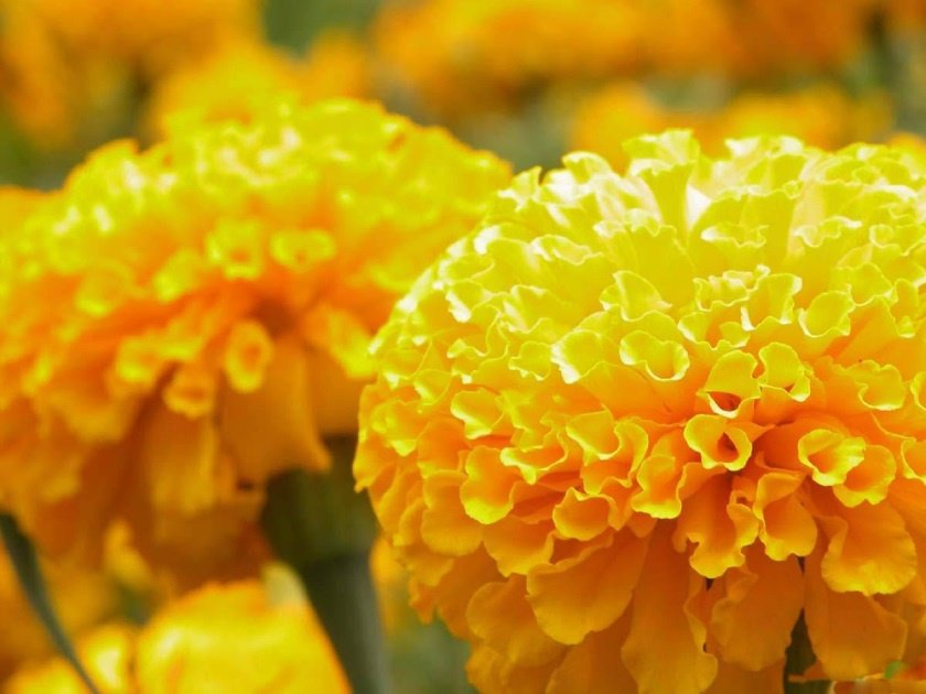 Картинки желтого цвета