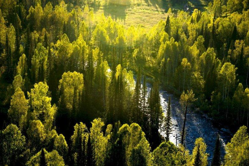 Лес в Рудном Алтае.