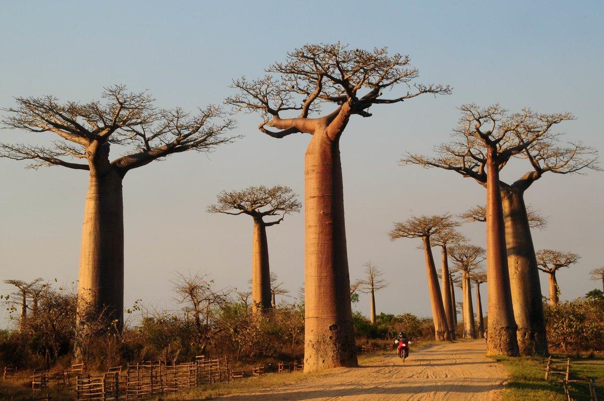 Растения африки картинка с названиями