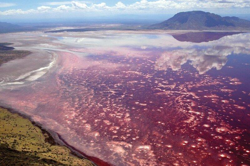 Озеро Натрон - это щелочное соленое озеро, расположенное на севере Танзании в области Аруши. Этот водоем является одним из самых суровых районов на Земле.