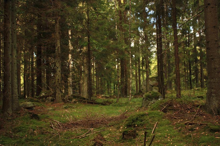 Картинки лес с анимацией