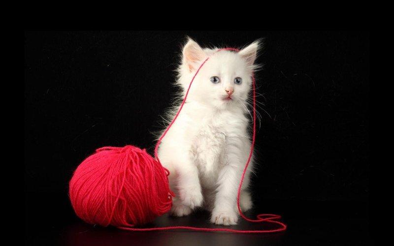 Котик и нитки