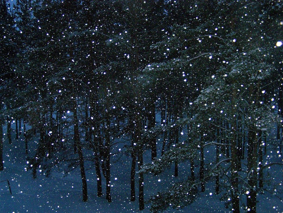 Спокойной ночи зимний лес и звезды гифка