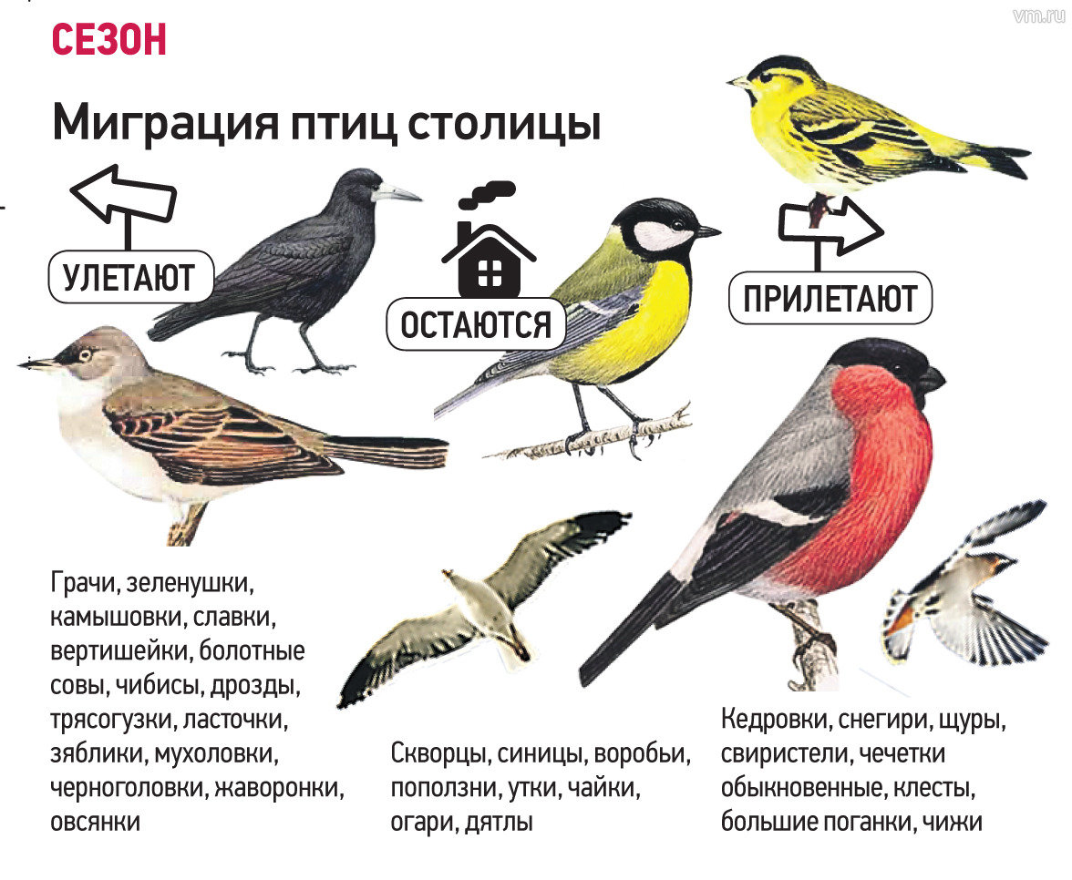 Юмористическое описание знаков зодиака в картинках враги