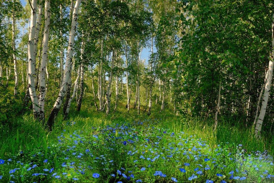 Красота родной природы