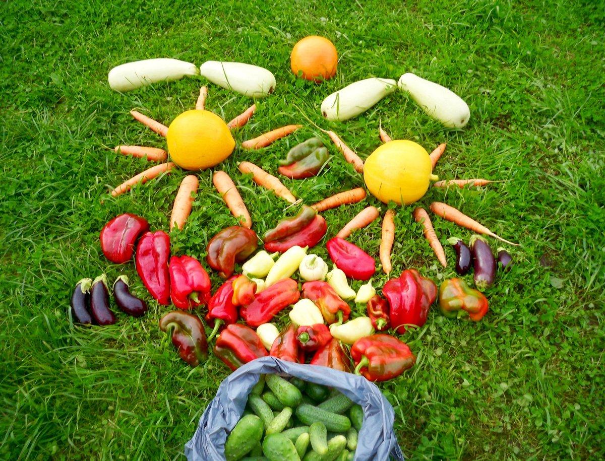 осенние картинки огорода домашней