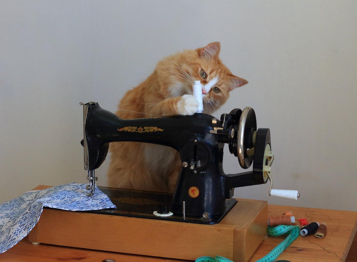 Прикольные картинки швейных машинок