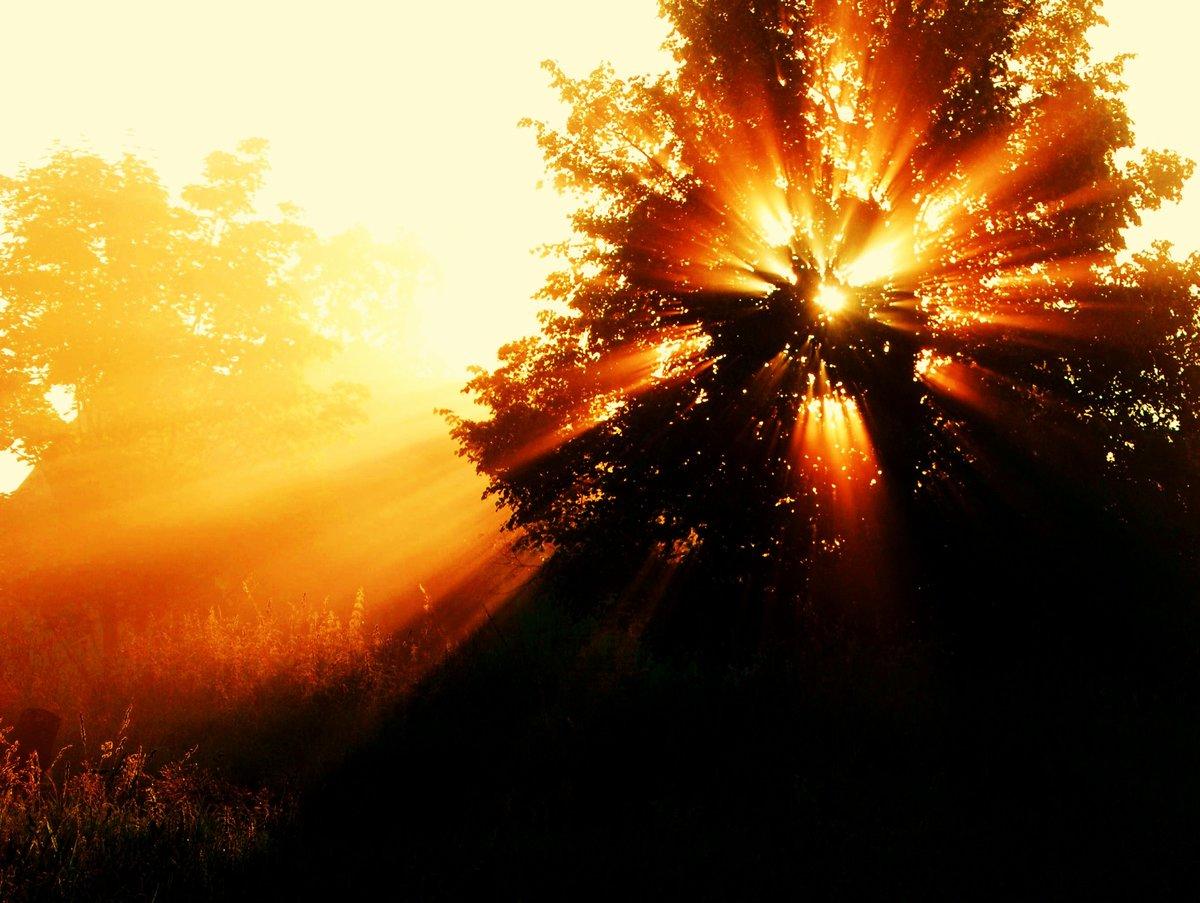 красивые картинки солнечного света скорее всего это
