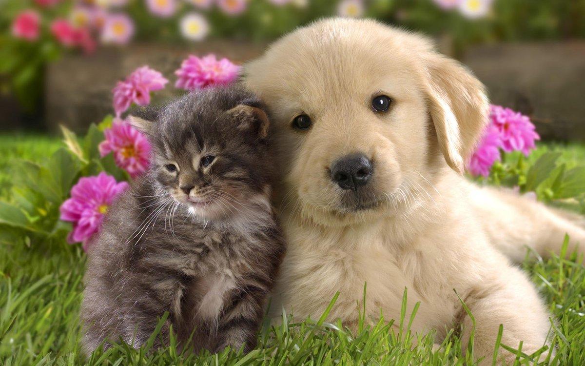 Открытки цветы с животными, картинки для срисовки