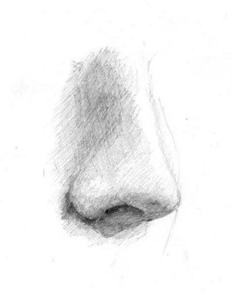 Картинка нос рисунок карандашом