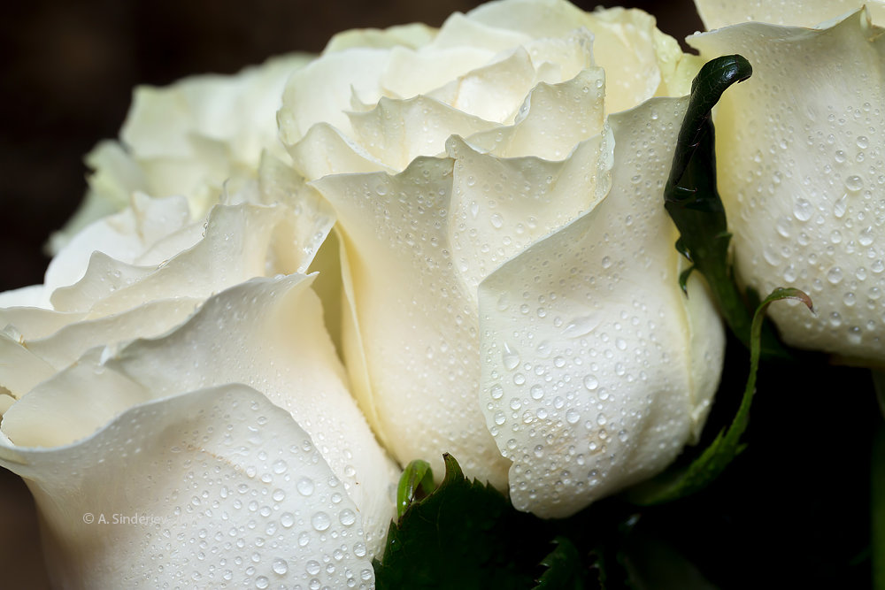 картинка белы бутон розы фермуаром японская
