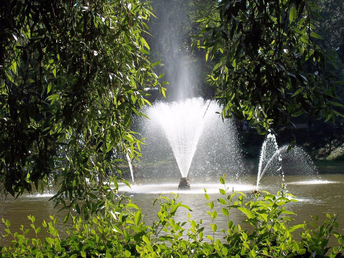 растения картинки фонтана природа центрального боя
