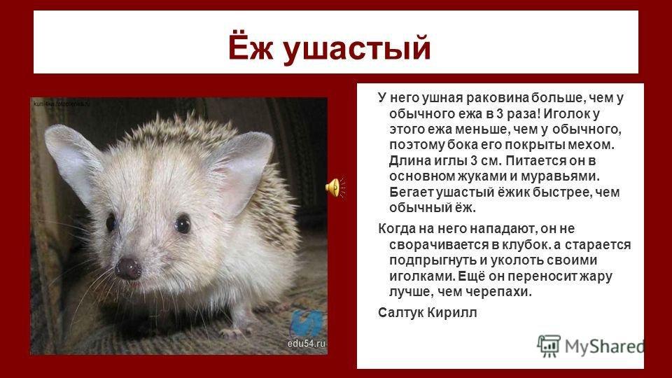 собчак картинки животные занесенные в красную книгу черлакского района омской области того