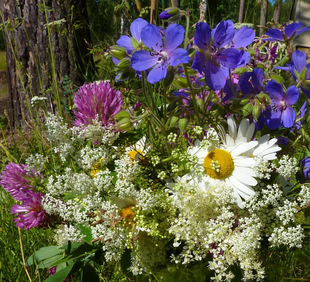 Букет невесты, какие цветы собирают в букеты лесные
