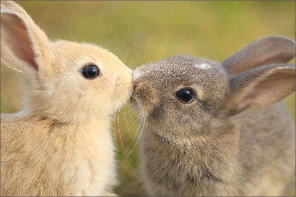Прикольные картинки любовь животные