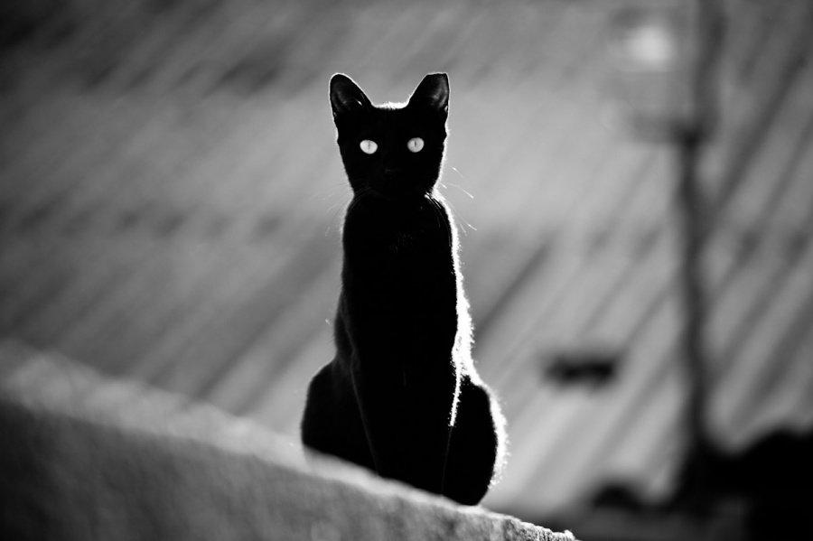 Картинки про черных кошек смешные
