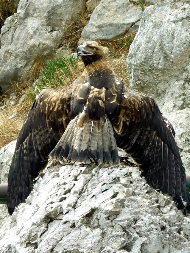 птицы в горах крыма получила