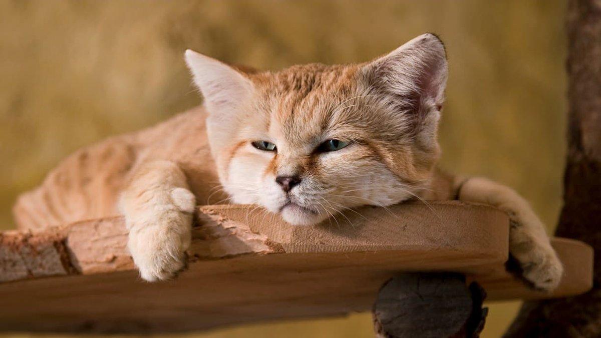 причалов песочные кошки фото чем приступить