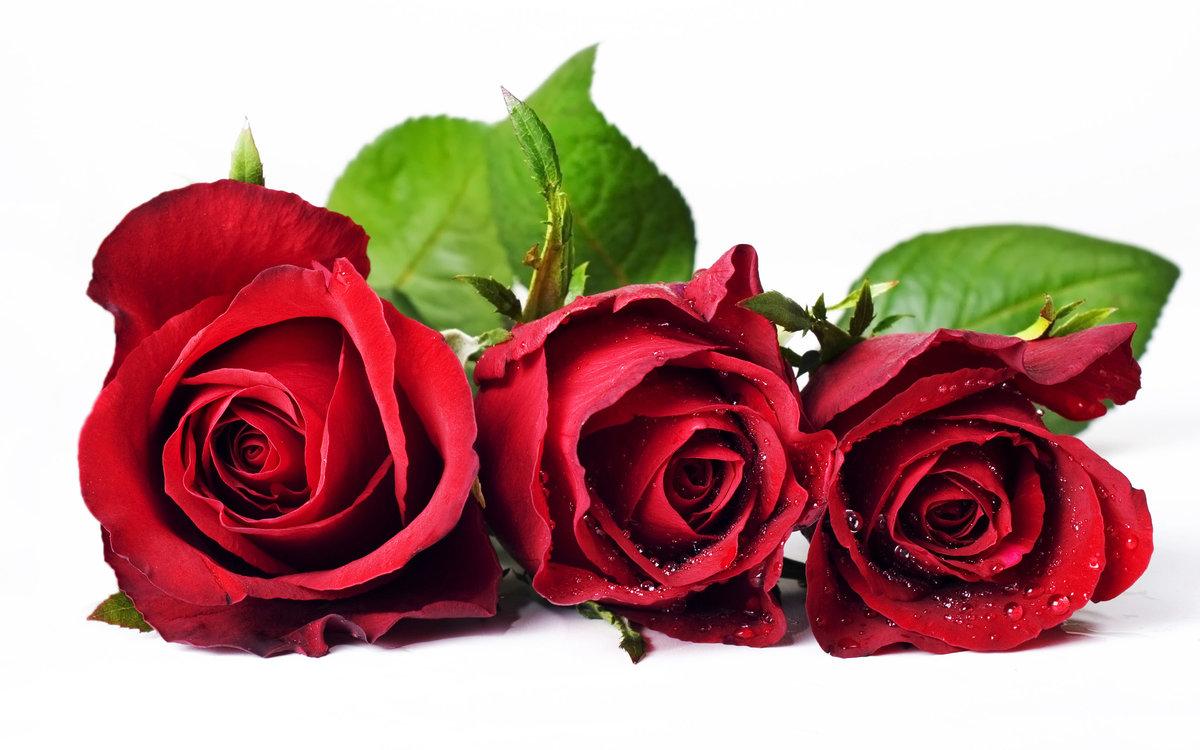 Днем, флеш открытка с розами