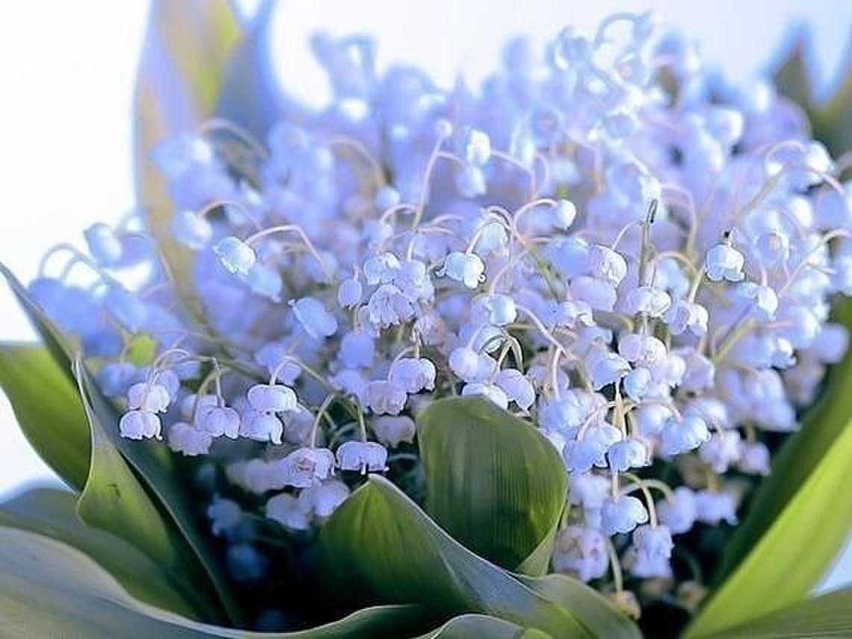 Открытки с днем рождения весенние цветы пропадала театре