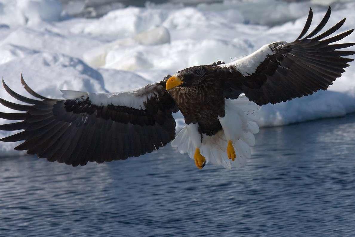 большие картинки с орлами сосногорске