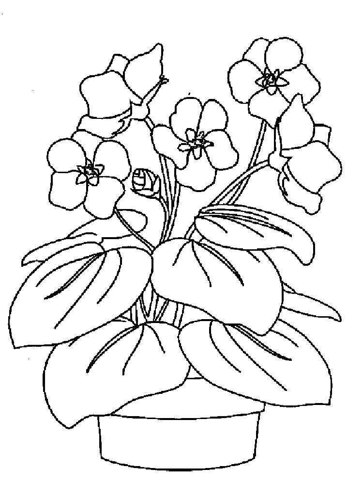 рисунки комнатных цветов с названиями карандашом любитель джунглей-то эта