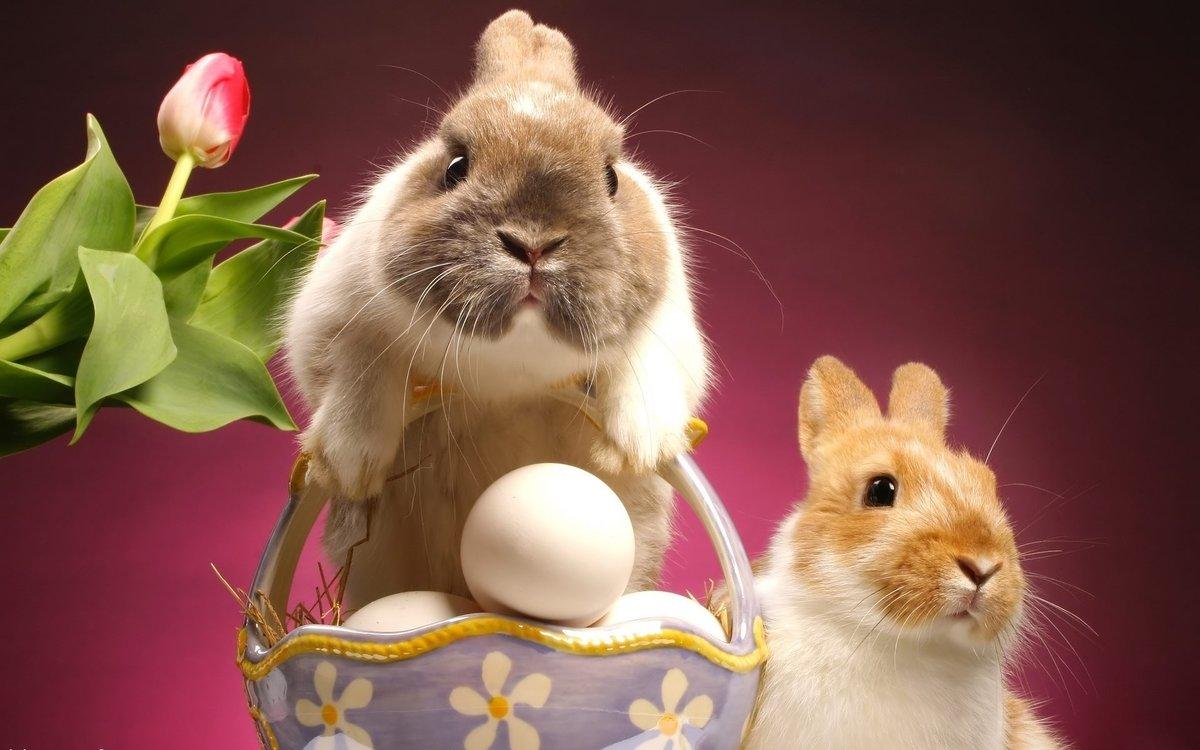 Пасхальные картинки с кроликом, картинки анимация все