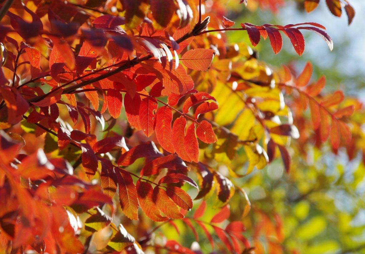 Лист рябины осенью фото