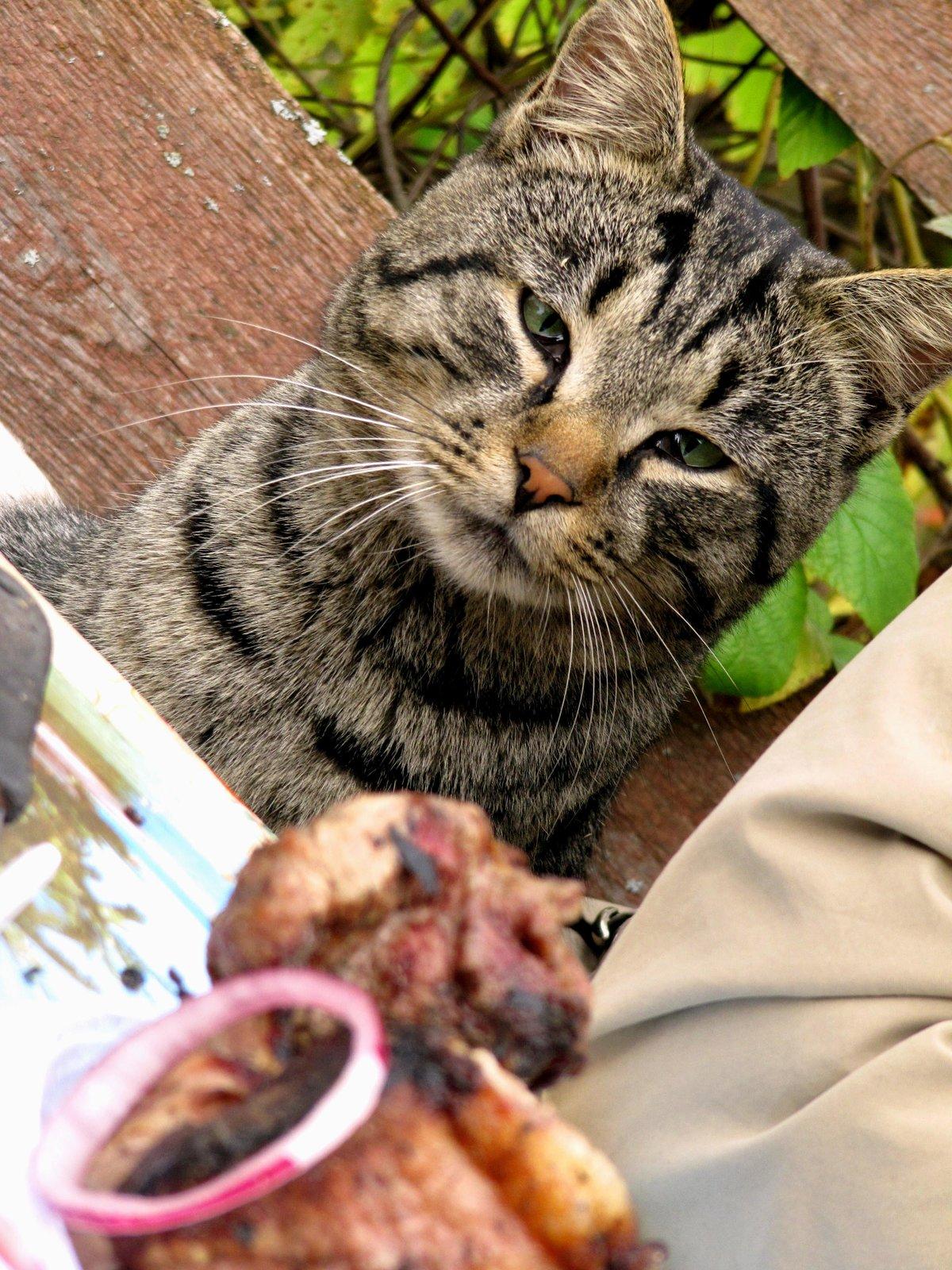 картинка кошки на шашлыках природе украшений изображениями змей