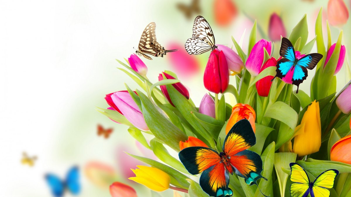Прикольными, открытка с тюльпанами и бабочками