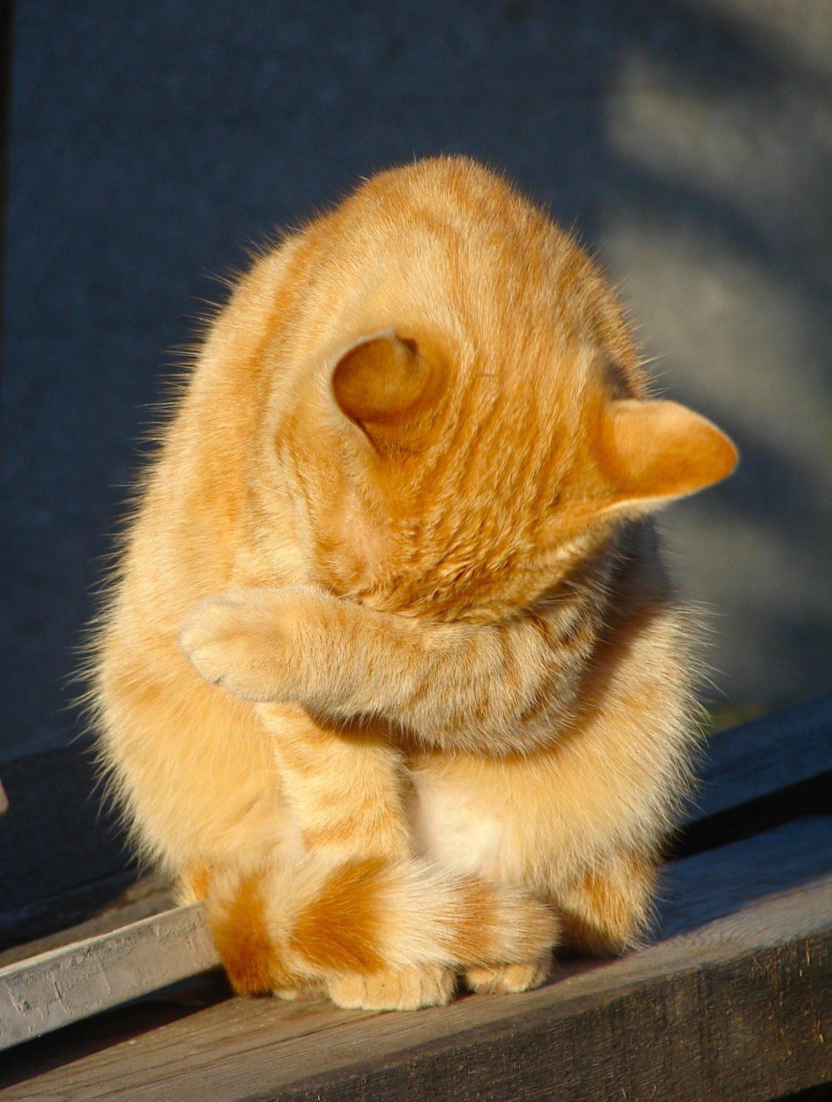 Открытки прости меня котенок, картинки индейцами открытка