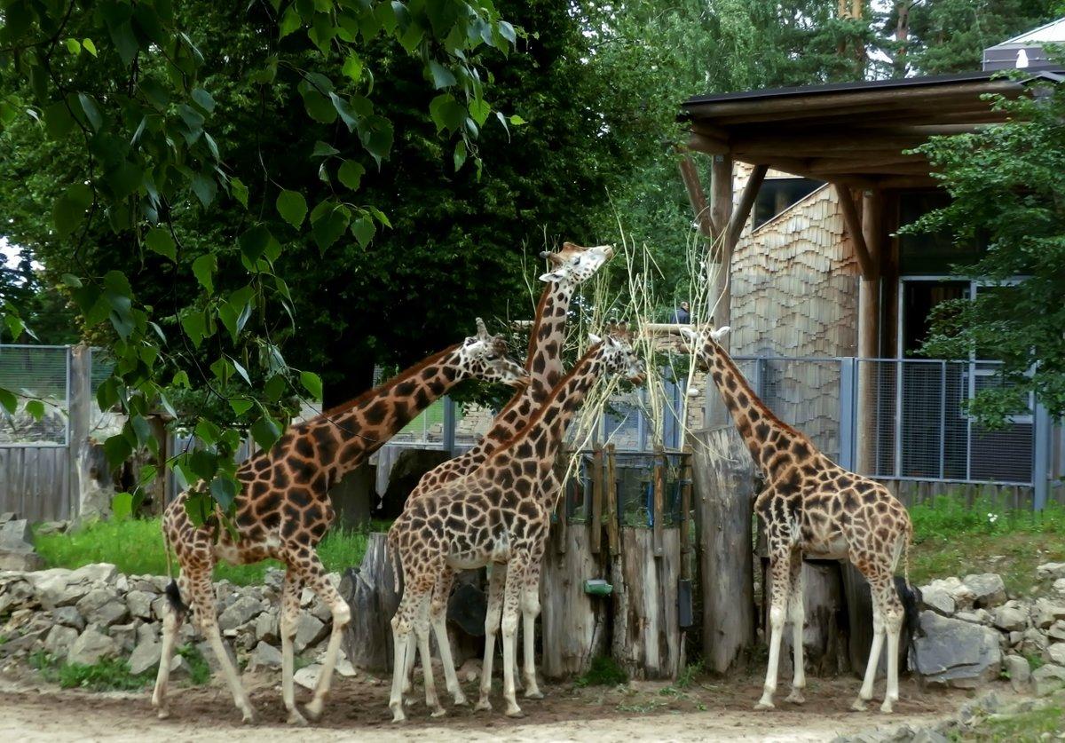Картинка зоопарк с животными