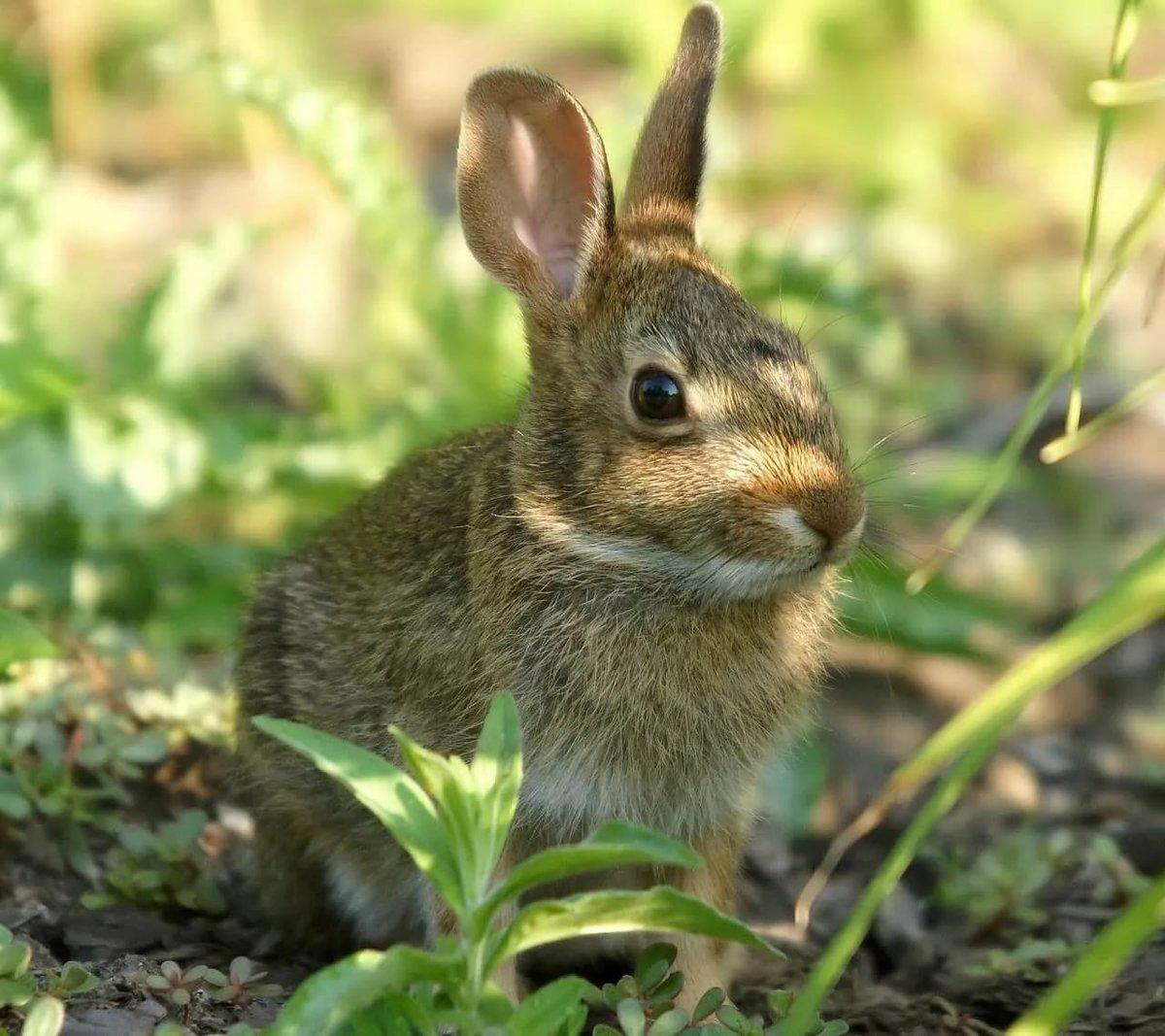 кадре они виды зайцев фото с названиями целью было