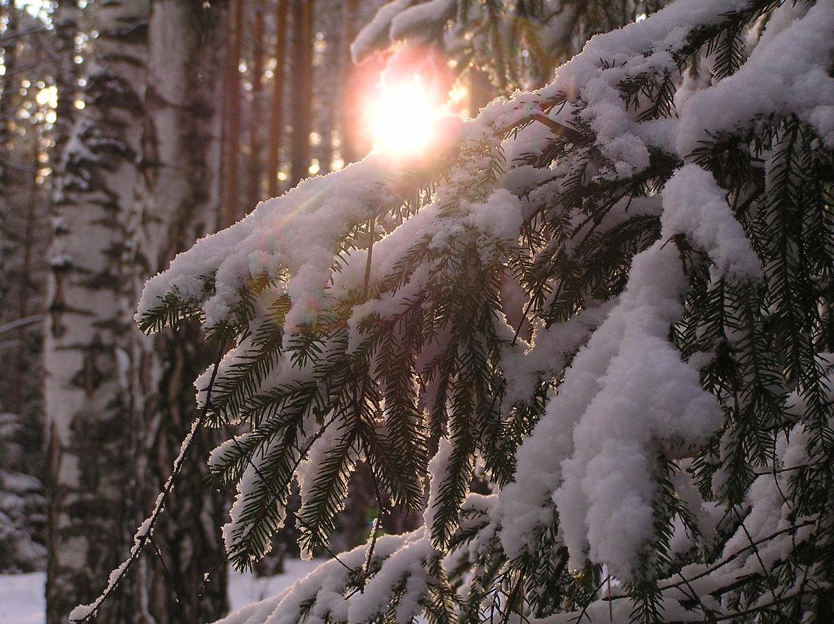 Сибирская природа фото тайга празднику можно