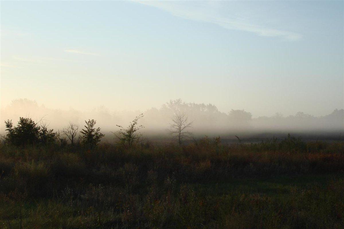 Осенний туман#луг #осень #пейзаж #природа #сентябрь #туман #утро