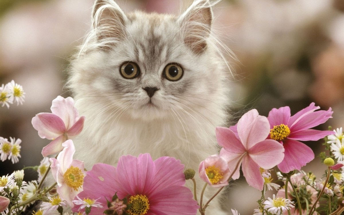 Успение, кот в цветах картинки