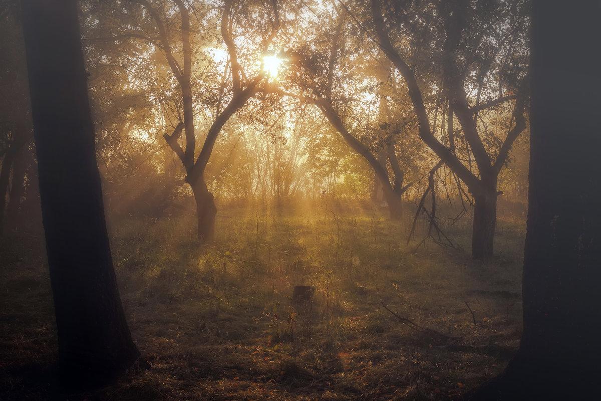 туманное утро#осень #туман #утро