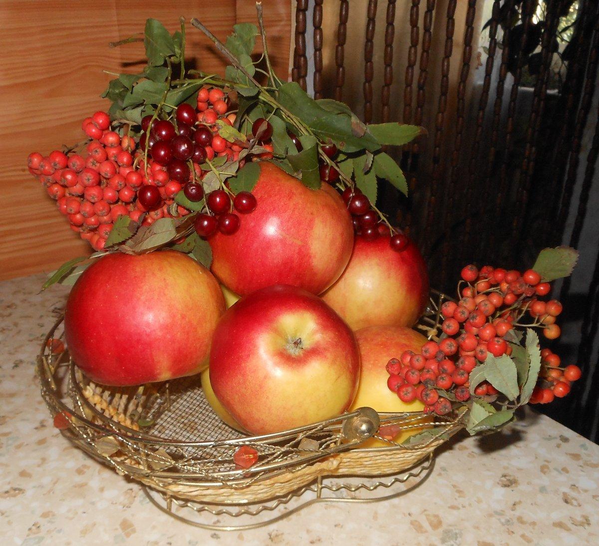 картинки рябины яблок губерниям, названиями