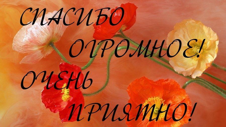 Картинка с надписью спасибо огромное, вас обожаю
