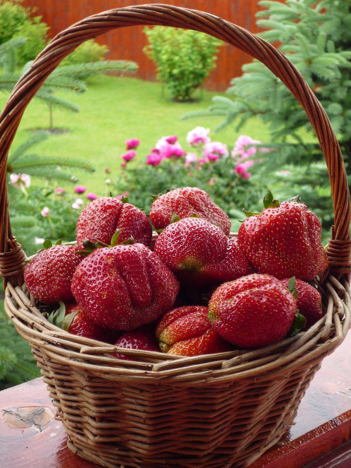 картинки июньские ягоды явно