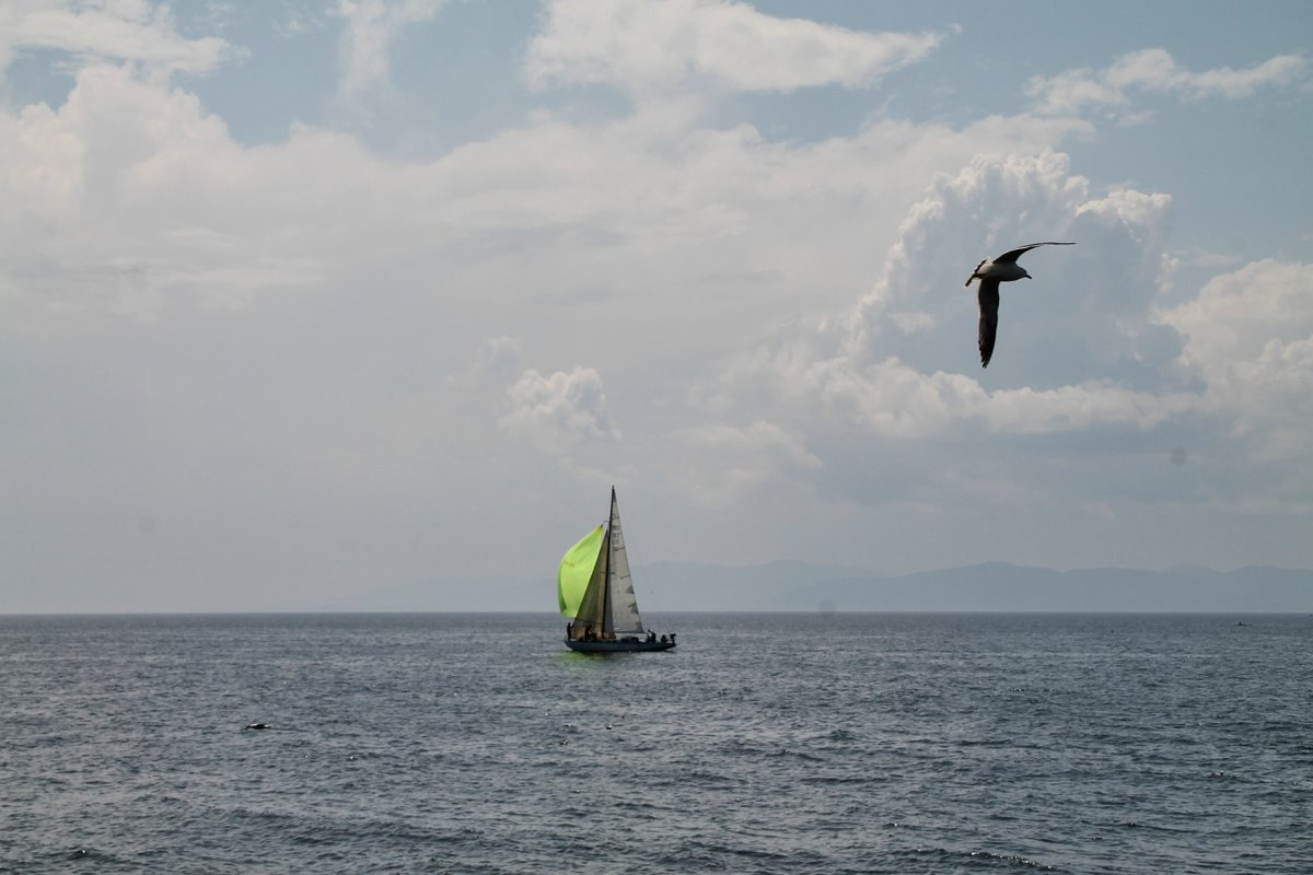 картинки море парус чайки гости