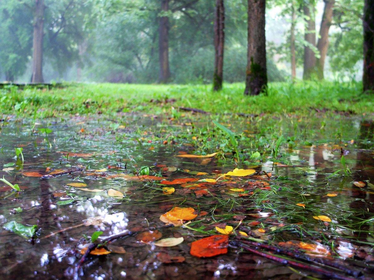 картинки с дождем и лужами что первый