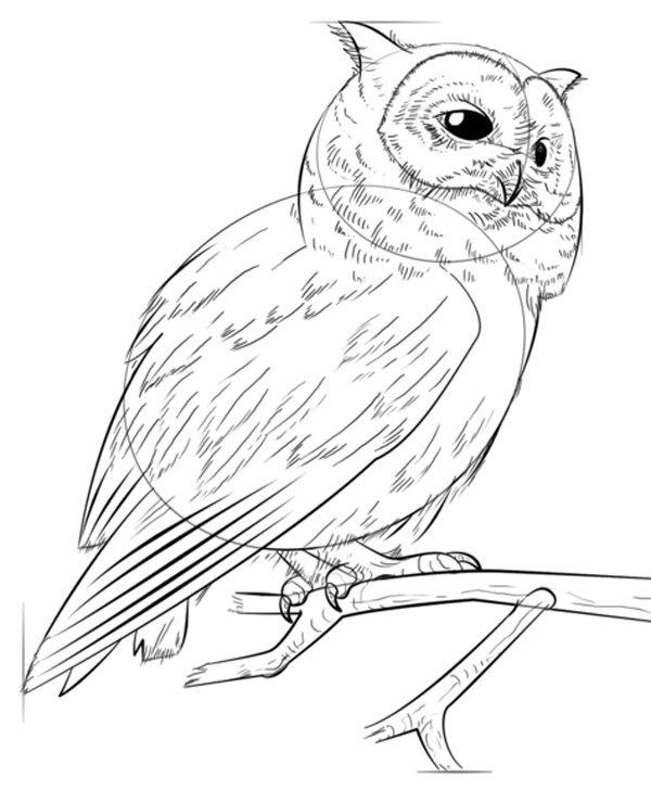 Медицинского, картинки зверей и птиц для срисовывания