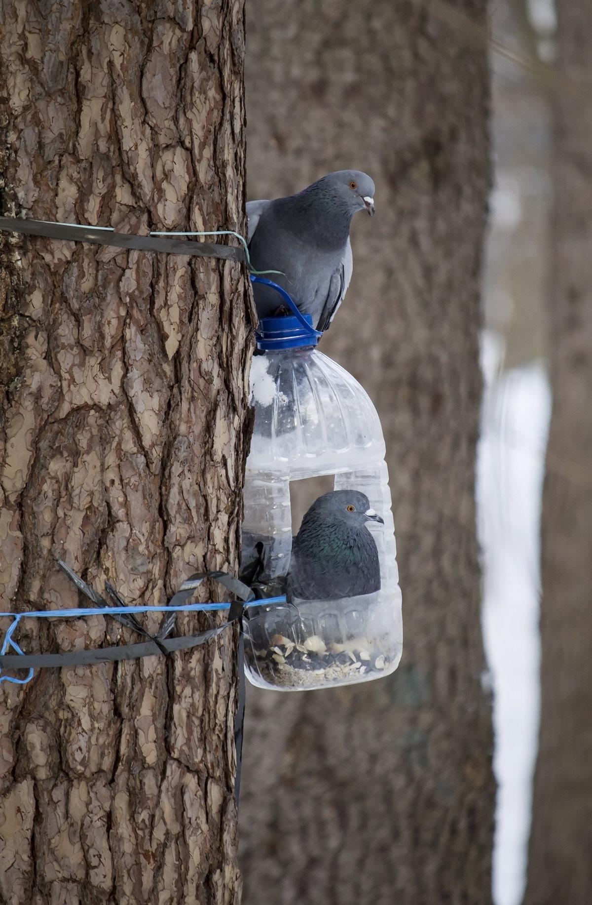 Картинки кормушки для голубей