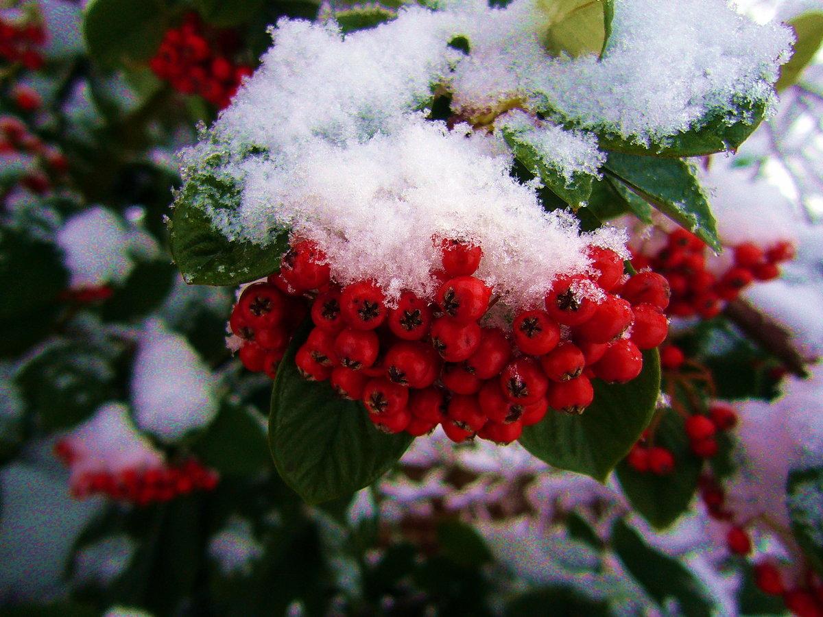 открытки рябина в снегу нас два правосудия