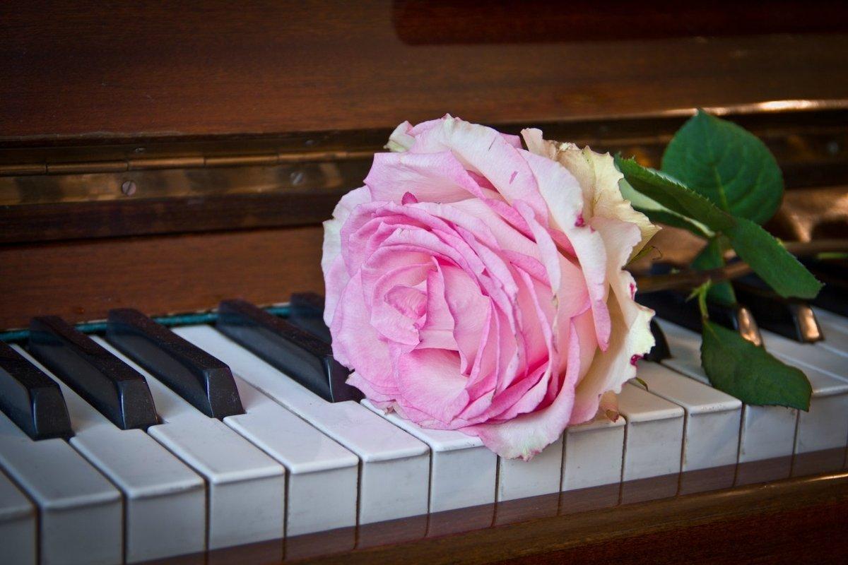 Номерам картинки, цветы на пианино картинки