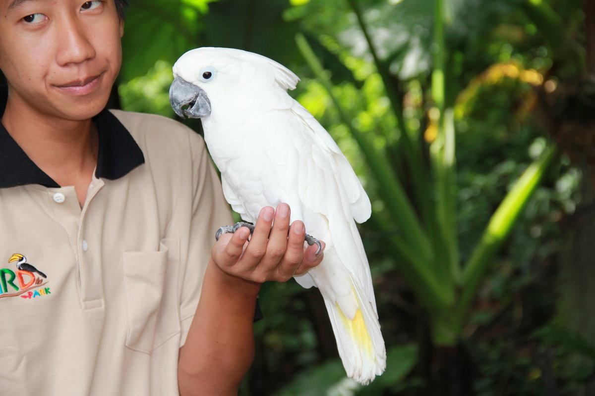 Певчие птицы россии фото стеллаж