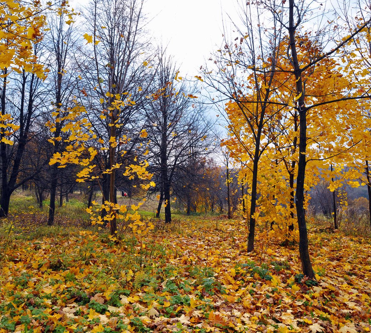 осень в октябре картинки детям временем для посещения